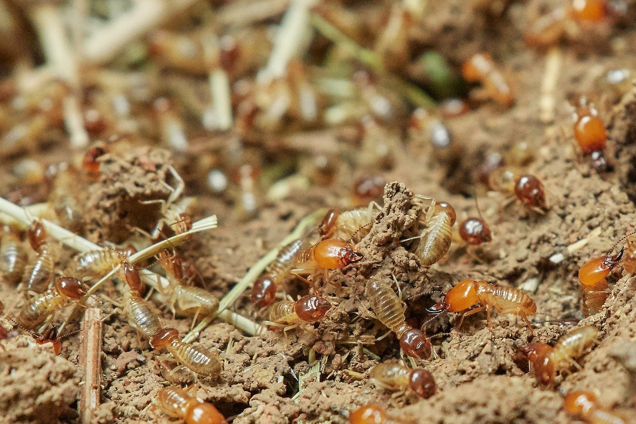 When To Call Termite Repair Contractors On Maui